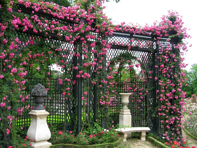 Trellis Lattice And Arbors Structures Plants Can Grow On